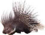 column_how-do-i-keep-porcupines-away