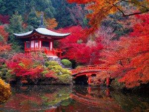 Kyoto-Pic-06