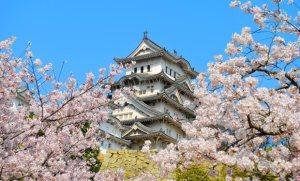 seasonal-spring-tokyo-580