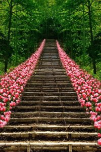 tulip-lined-staircase-in-kyoto-japan-21331